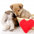 Royalty-Free Stock Photo: Valentine puppies iwith a heart. isolated on white background