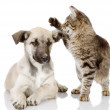 The dog and cat lie nearby. isolated on white background — Stock Photo #13836802