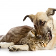 The dog and cat lie nearby. isolated on white background — Stock Photo #13836889