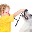 The boy listens to puppy through a stethoscope — Stock Photo