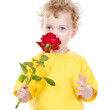 Portrait of boy smelling red rose. isolated on white background — Stock Photo