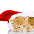 Christmas Santa cat. isolated on white background — Stock Photo