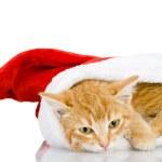 Christmas Santa cat. isolated on white background — Stock Photo