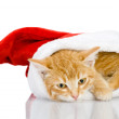 Christmas Santa cat. isolated on white background - Stock Photo