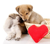Valentine puppies iwith a heart. isolated on white background — Stock Photo