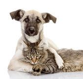 Köpek ve kedi yakın yalan. beyaz arka plan üzerinde izole — Stok fotoğraf