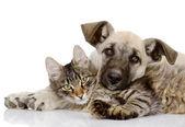 O cão e o gato mentem nas proximidades. isolado no fundo branco — Foto Stock