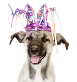 Dog in a crown. isolated on white background — Stock Photo