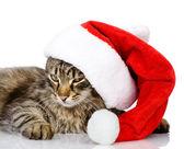 Katze in eine Weihnachtsmann-Mütze. isoliert auf weißem Hintergrund — Stockfoto
