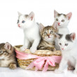 Three small kittens in a basket — Stockfoto