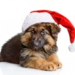 Cute puppy dog in red christmas Santa hat — Stock Photo