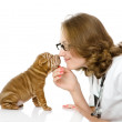 Female veterinarian examining a sharpei puppy dog — Stock Photo