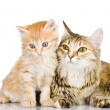 Royalty-Free Stock Photo: Cat mother and her kitten together