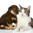 Cat and dog together - Stock Photo
