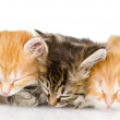 Three kittens sleep a heap — Stock Photo