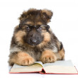 Purebred puppy in glasses read book — Stock Photo #18034373