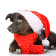 Foto Stock: Black dog in red christmas Santhat
