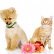 He puppy and cat sit near flowers — Foto Stock