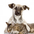 The dog embraces a cat — Stock Photo #18034519