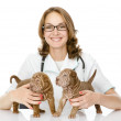 The veterinarian embraces two sharpei puppies dog — Stock Photo #18034585