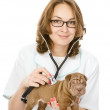 Veterinarian doctor making a checkup of a sharpei puppy dog — Stock Photo #18034699
