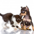 The kitten plays with a puppy — Stock Photo