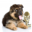 Winner dog — Stock Photo