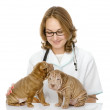 The veterinarian embraces two sharpei puppies dog — Stock Photo #18034781