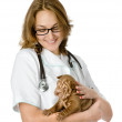 Vet holding a little puppy sharpei dog — Stock Photo