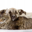 The cat and dog lie together — Stock Photo