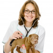 Veterinarian doctor making a checkup of a sharpei puppy dog — Stock Photo #18035007