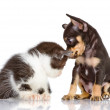 Puppy dog and sad kitten — Stock Photo