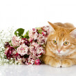 Kitten and flower — Stock Photo