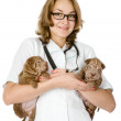 Two puppies sharpei dog on hands at the veterinarian — Stock Photo