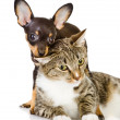 Royalty-Free Stock Photo: Puppy with a cat