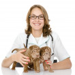Stock Photo: The veterinarian embraces two sharpei puppies dog