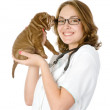 Beautiful veterinarian with puppy sharpei dog — Stock Photo