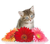 Kitten and flower looking at camera — Stock Photo