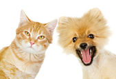 Cat and dog looking at camera — Stock Photo