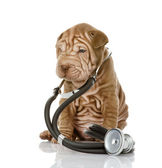 Sharpei puppy dog with a stethoscope on his neck — Stock Photo