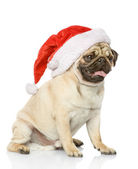 Puppy dog in red christmas Santa hat — Stock Photo