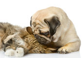 The puppy kisses a cat — Stock Photo