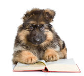Purebred puppy in glasses read book — Stock Photo