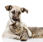The dog hugs a cat — Stock Photo