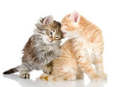 The kittens who were played among themselves — Stock Photo