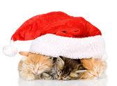 Christmas Santa cats — Stock Photo