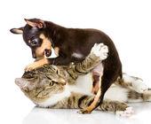 Cachorro con un gato — Foto de Stock