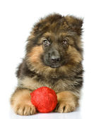 Puppy with a wool ball. looking at camera — Stock Photo