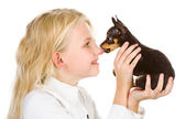 The tiny puppy kisses the girl on a nose — Stock Photo