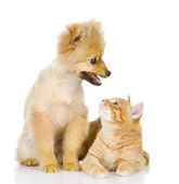 The dog and cat look at each other — Stock Photo